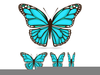 Butterfly Wing Designs Image