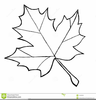 Clipart Sugar Maple Leaf Image