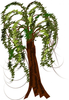 Clipart Tree Willow Image