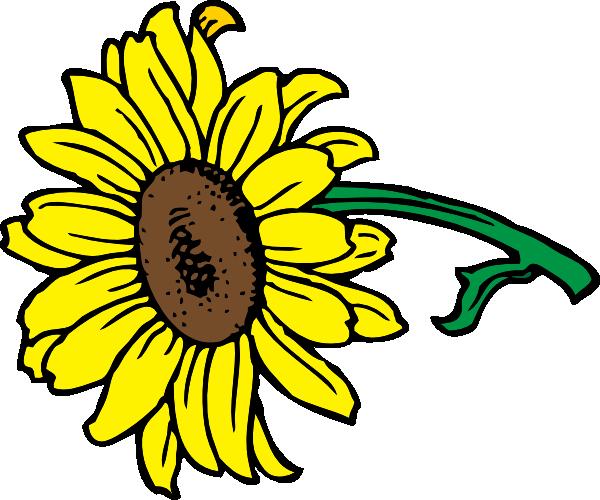 sunflower clip art at clker com vector clip art online royalty rh clker com sunflower clip art free sunflower clip art free