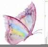Butterfly Clipart For Wedding Invitations Image