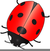 Animated Ladybird Clipart Image