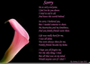 Im Sorry Poems Image