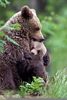 Bear Cubs Hugging Image