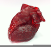 D Printed Heart Image