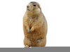 Animated Prairie Dog Clipart Image