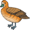 Orange And Brown Duck Clip Art
