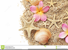 Free Sea Shell Clipart Image