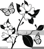Clipart Flowers Black And White Image