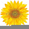 Large Sunflower Clipart Image