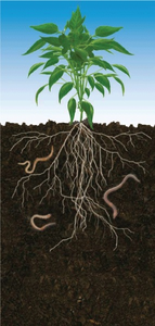 Plant Roots Image