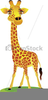 Clipart Giraffe Cartoon Image
