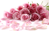Pink Flower Wallpaper Image