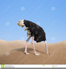Ostrich Head In Sand Free Clipart Image