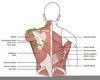 Spine Scapula Pain Image