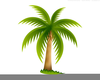Palm Tree Art Image
