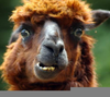 Stupid Animals Faces Image