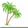 Clipart Palm Trees Image