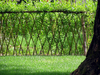 Willow Living Fence Image