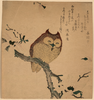 Owl And Magnolia. Image
