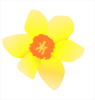 Daffodil (stripped) Clip Art