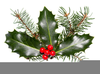 Christmas Holly Berries Clipart Image