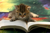 Cat Book Image