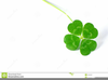 Free Clipart Of Leaf Clover Image