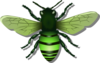 Bee L Green Image