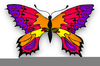 Animated Clipart Of Butterflies Image