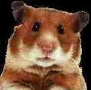 Hamster Face Image