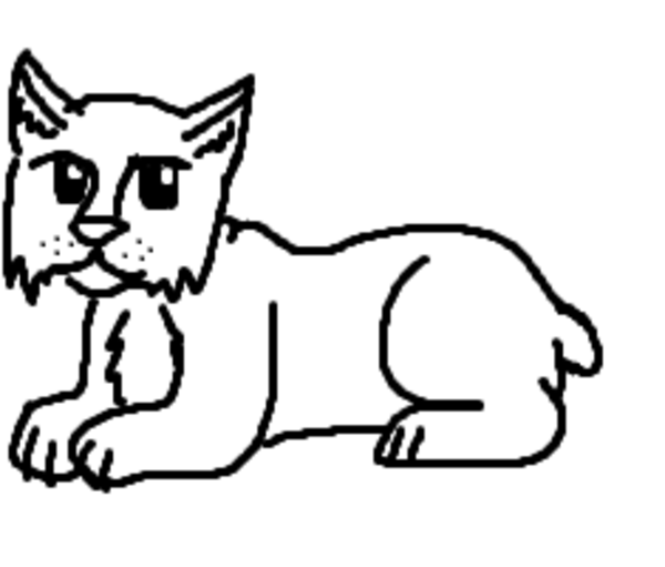 baby bobcat coloring pages - photo #27