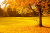Yellow Autumn Image