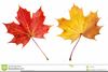 Red Leaf Clipart Image