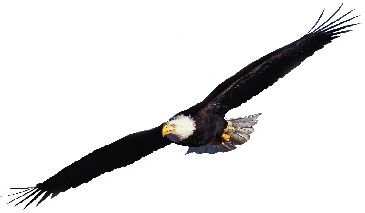 flying eagle clip art - photo #3