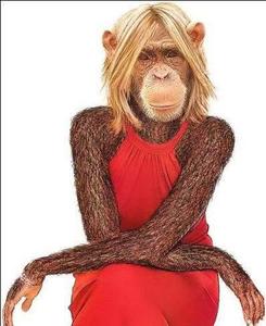 Gambar Monyet Lucu Dengan Gaya Peminim Free Images At Clker Com