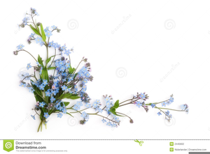 Forget Me Not Flowers Clipart Image