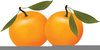 Cartoon Oranges Clipart Image