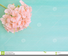 Pink And Green Flower Clipart Image