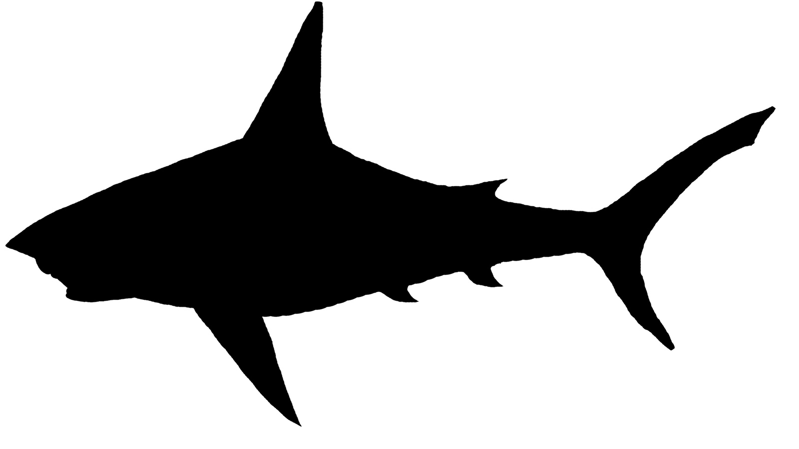Shark Sil | Free Images at Clker.com - vector clip art online, royalty ...