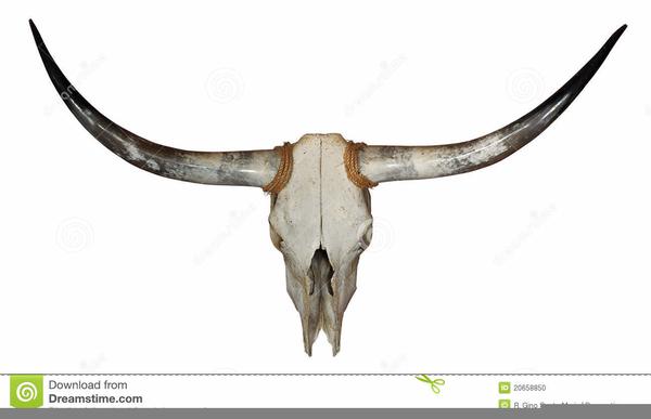Texas Longhorn Skull Clipart Free Images At Clker Com Vector