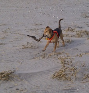 Dog With Stick Image