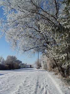 Winter Walk Image