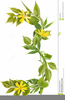 Clipart Branches And Flowers Image