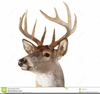 Free Clipart Deer Heads Image
