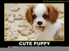 Cute Puppy Posters Image