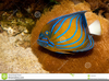Catalina Goby Clipart Image