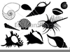 Clipart Free Sea Shell Image