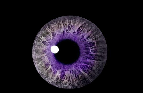 Eye Purple | Free Images at Clker.com - vector clip art online ...