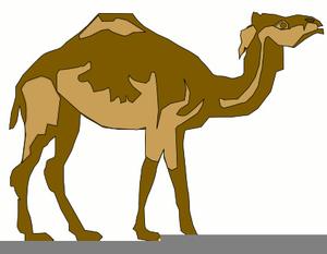 Camel Clipart - 70 cliparts